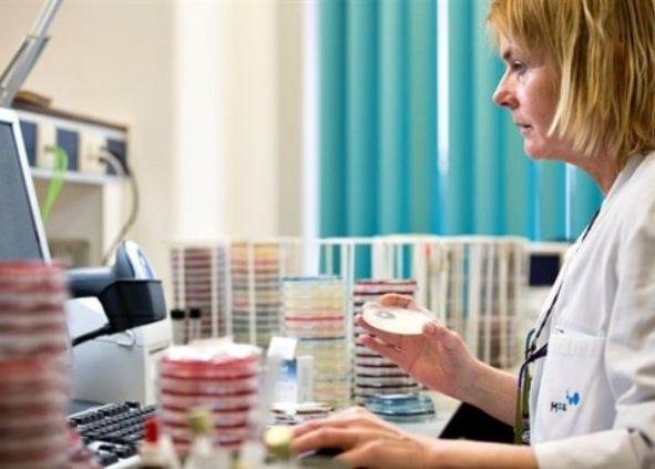 выращивание культур в чашке Петри в микробиологической лаборатории