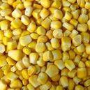 Стандартные образцы кукурузы