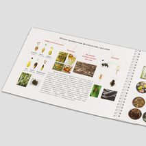 Определение спор головни методом микологической экспертизы зерна пшеницы пример страницы