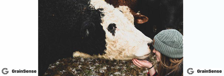 Экспресс анализатор зерна и кормов для животных